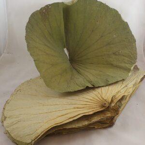 Frunze de lotus