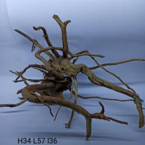 Radacina Finger Wood unicata JWM01