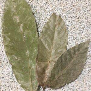 Frunze de cacao 10gr ~10 buc
