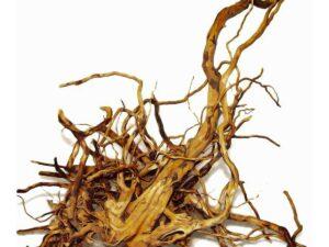 Radacina Red Moor 20-35cm