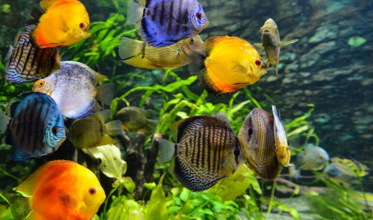 întreținerea unui acvariu