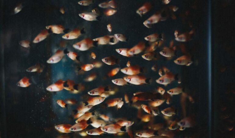 Ce le lipseste pestilor din acvariu