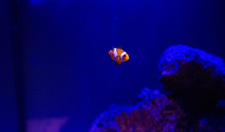 cum sa curati un acvariu cu pesti