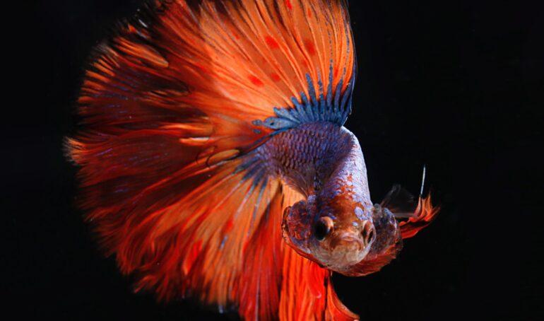 tipuri de pești care nu se înțeleg cu alte specii