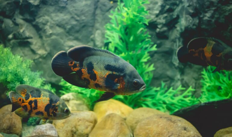 tipuri de pești